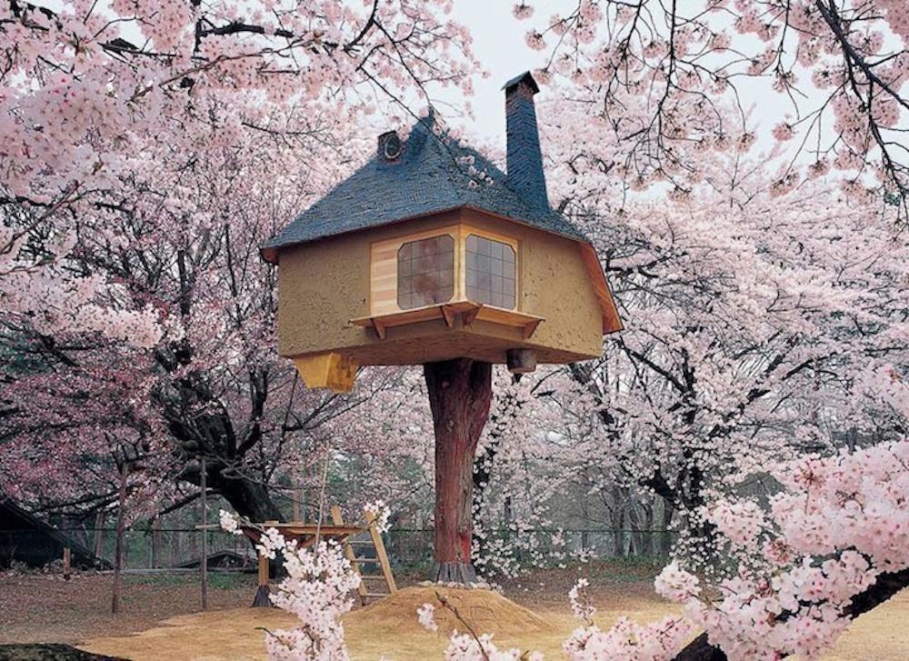Cesnjev cvet beautyfull blog hisa na drevesu