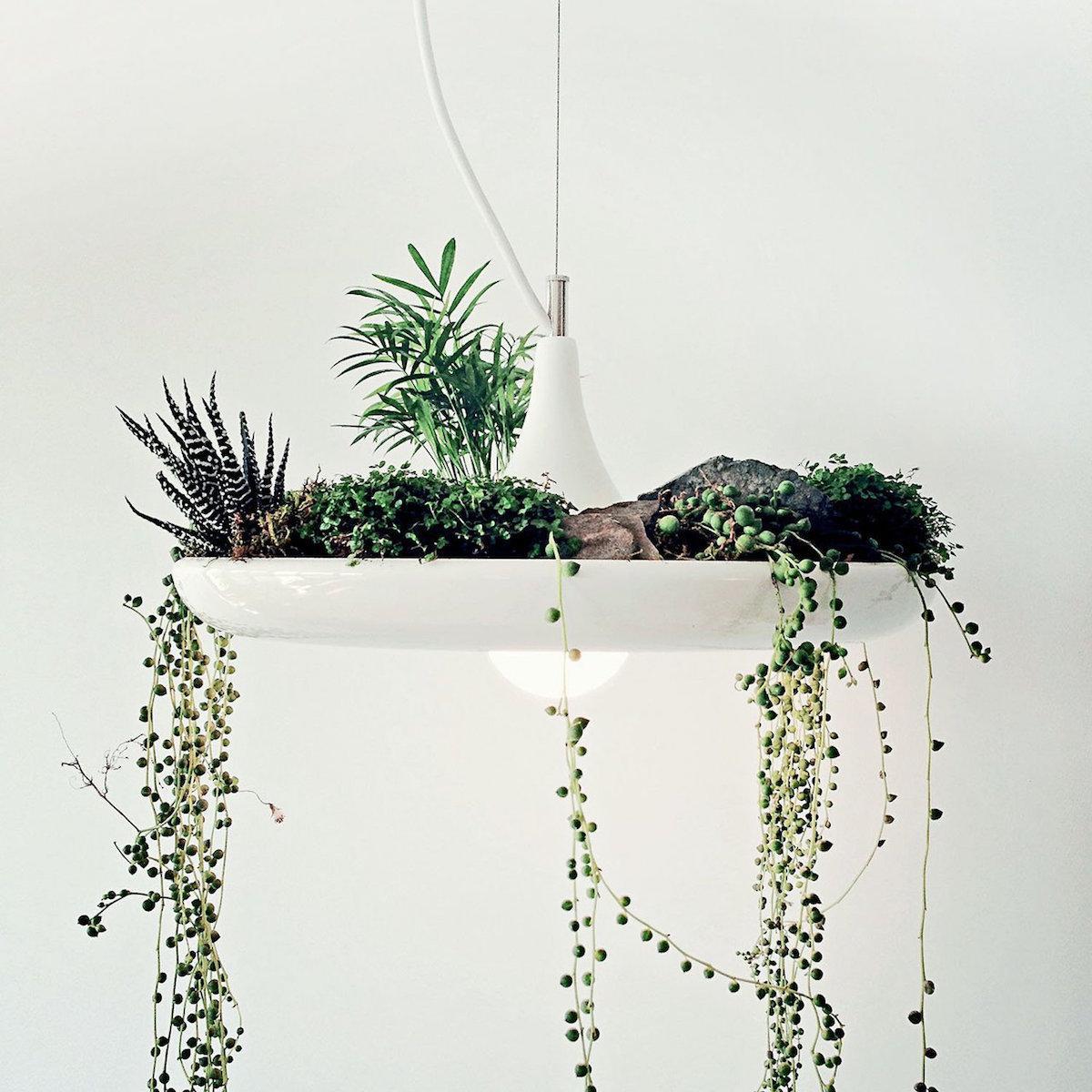 luc z zelenjem vrt v stanovanju beautyfullblog