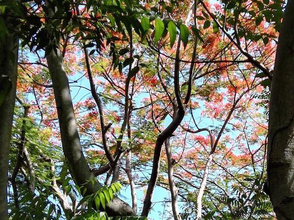 Gili Eco Villas Trawangan trees by Beautyfullblog