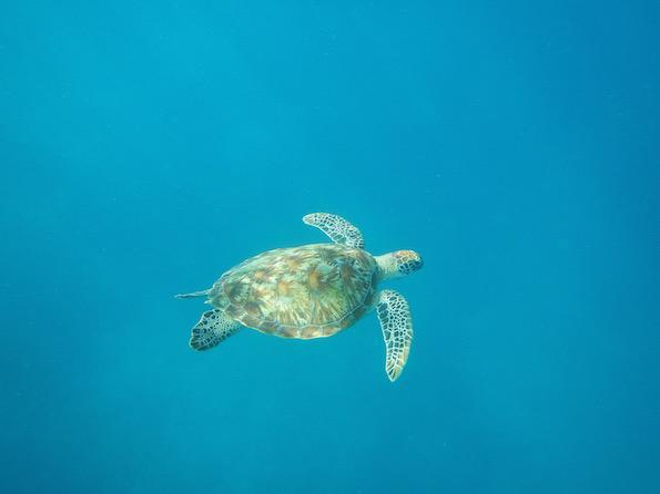Beautyfullblog Gili Eco Villas Trawangan Turtle