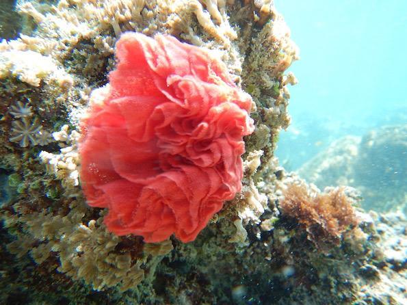 Beautyfullblog Gilli Eco Villas Trawangan korala
