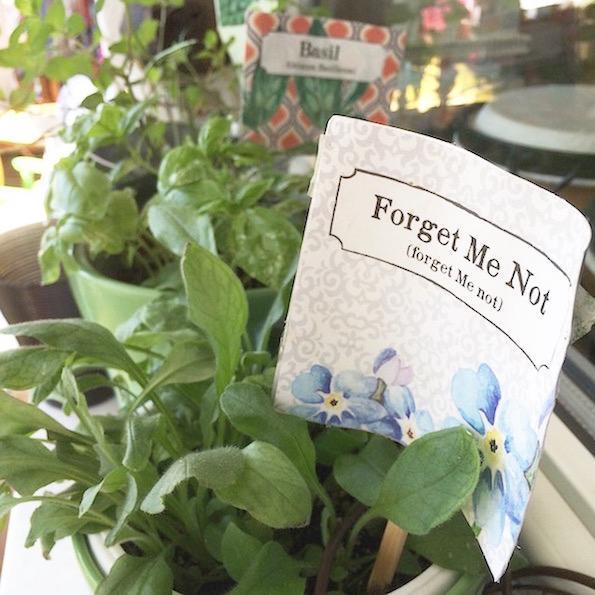 spomincice pocket garden Beautyfullblog 12