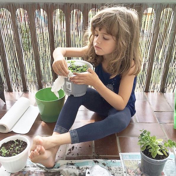 vrt doma spomincice pocket garden Beautyfullblog 4
