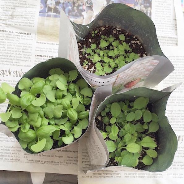 zeleni vrt doma pocket garden Beautyfullblog