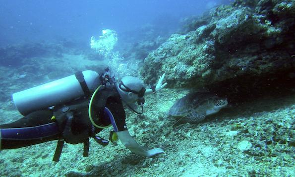 Slow Villas diving turtles