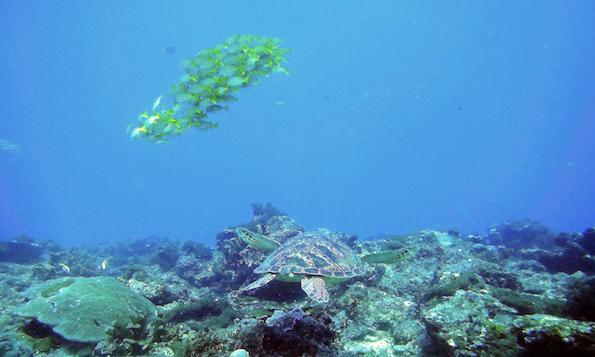 Diving Gili Air