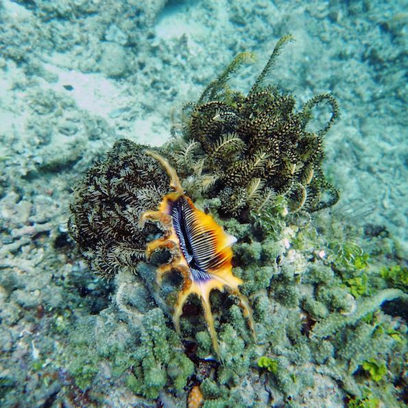 Diving Gili Indonesia