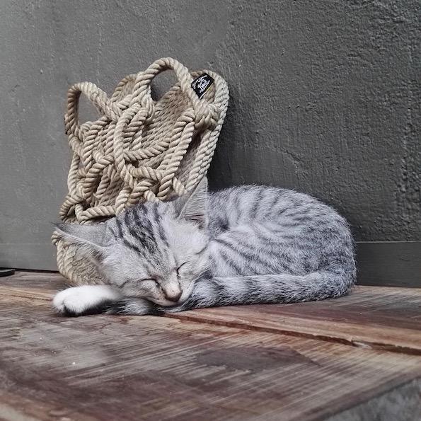Slow Villas Indonesia Animals
