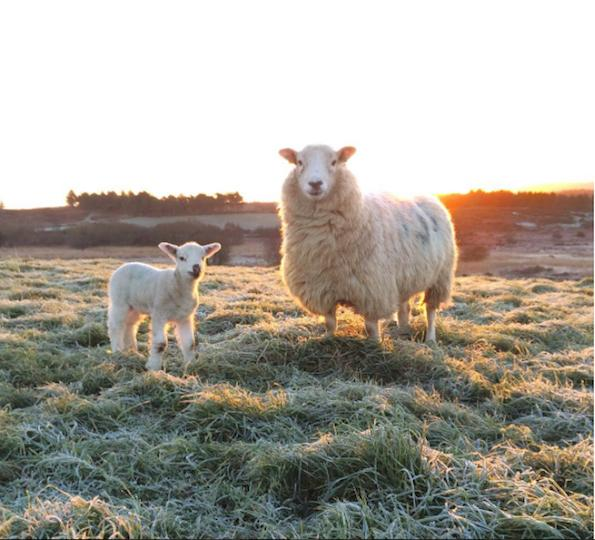 27-pletenine-beautyfullblog-sheep-by-benjaminhole