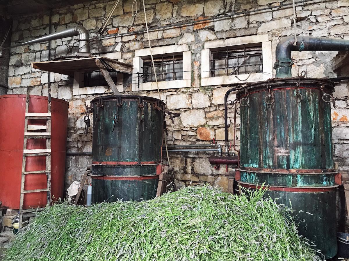 etericno olje sivka hvar beautyfullblog destilarna zastražišče