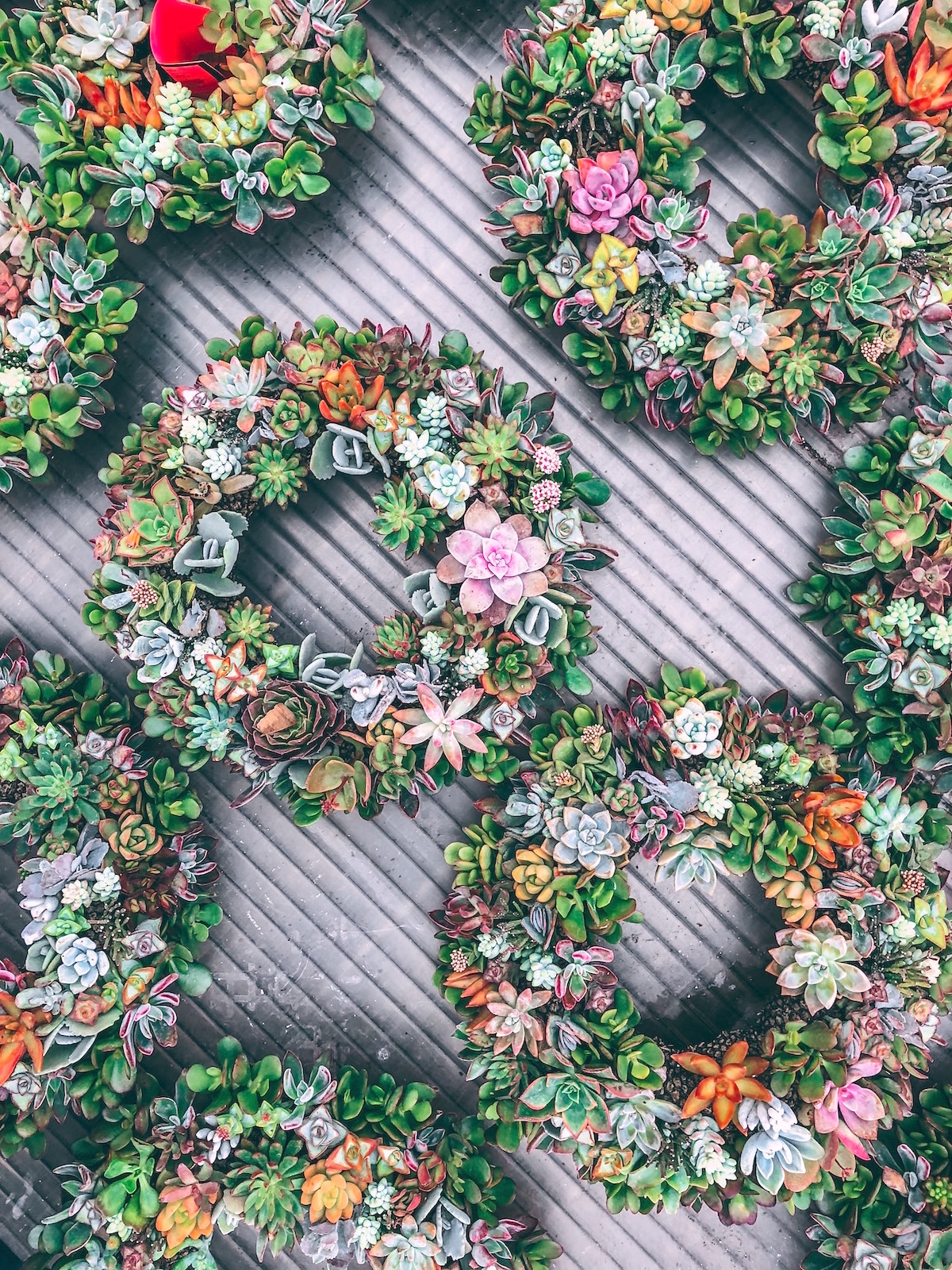 socnice sukulente vzgoja nasveti beautyfullblog