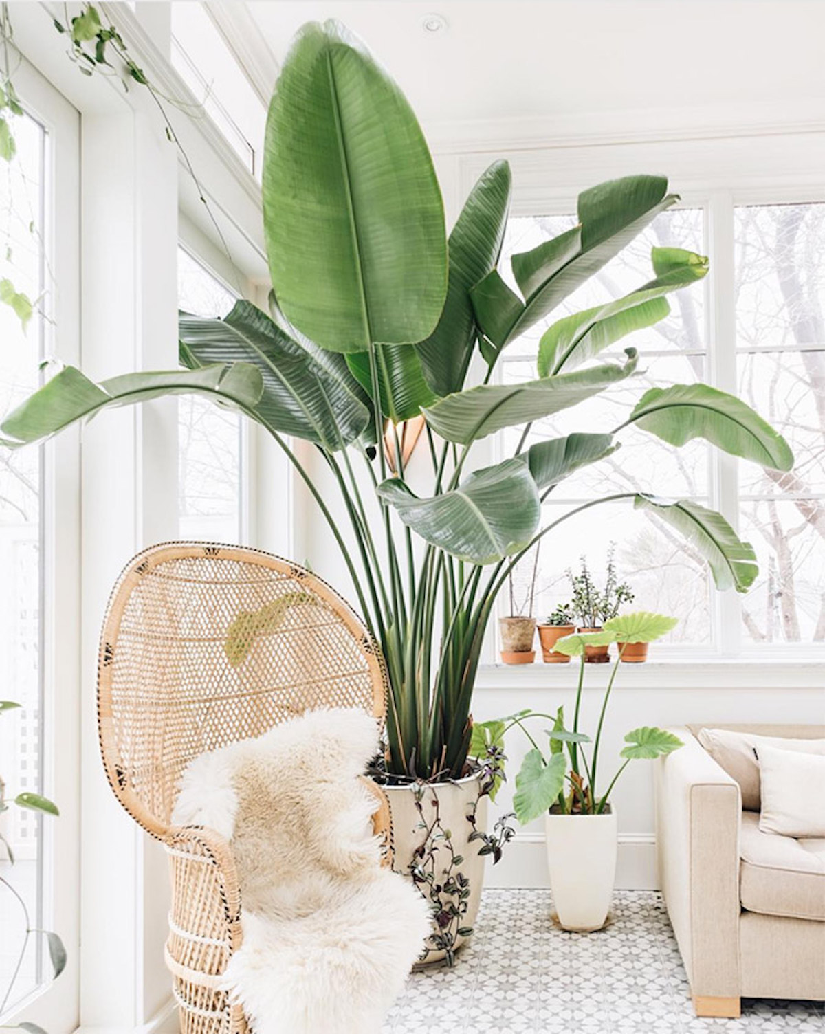 sobne rastline gardenia cvetlicarna beautyfull blog