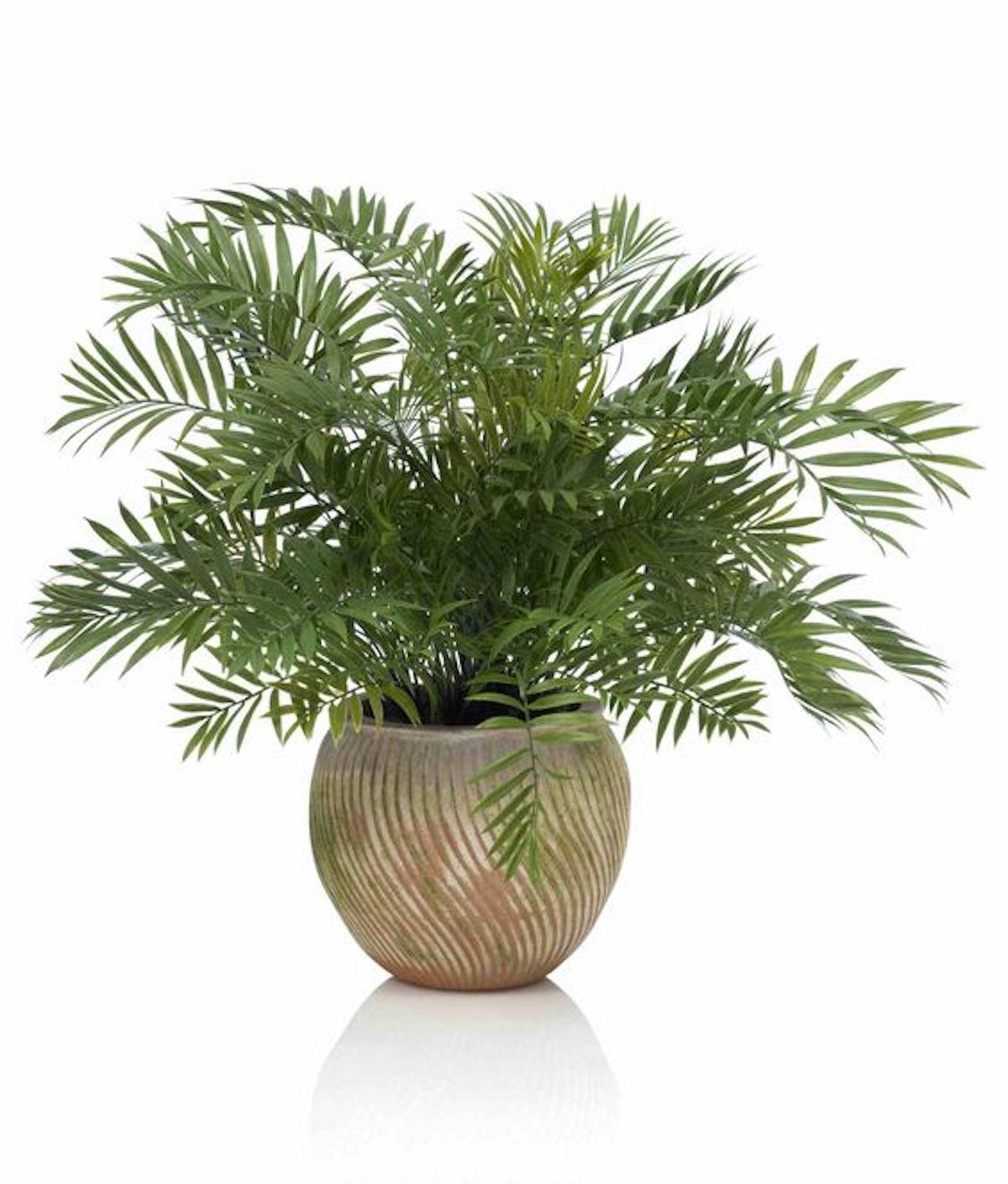 sobne rastline gardenia cvetlicarna beautyfull blog areca palm