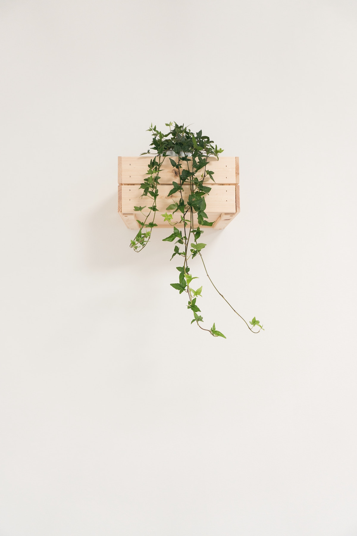 sobne rastline gardenia cvetlicarna beautyfull blog bršljan