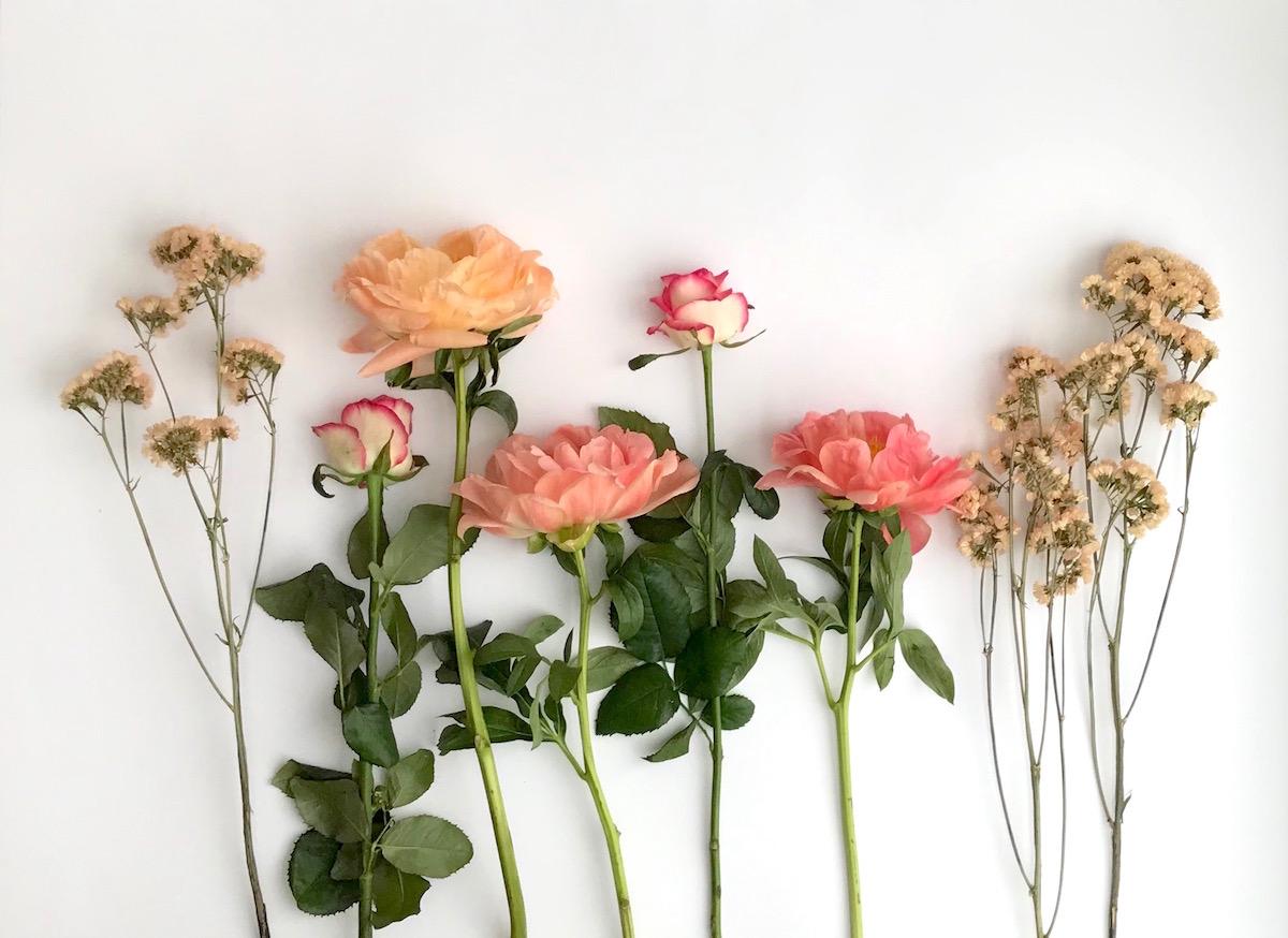 porocni sopek gardenia beautyfull blog
