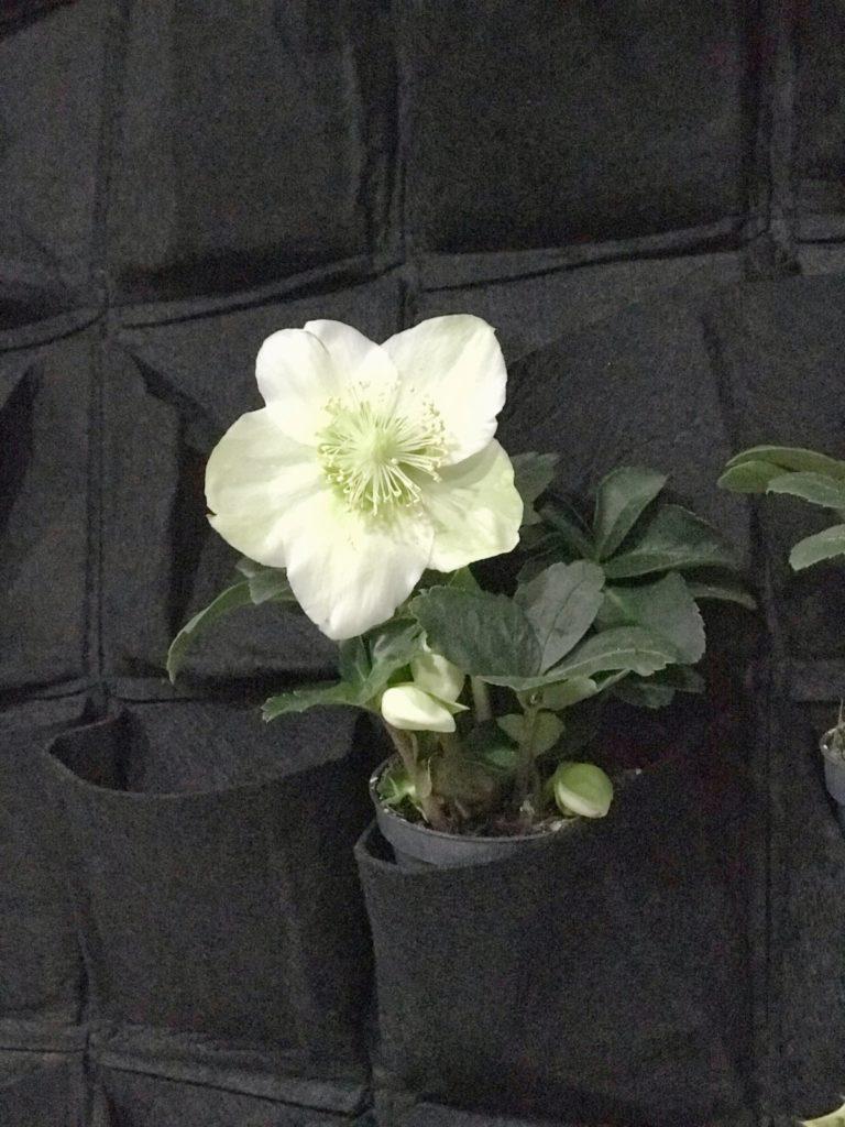 teloh adventni koledar diy rože