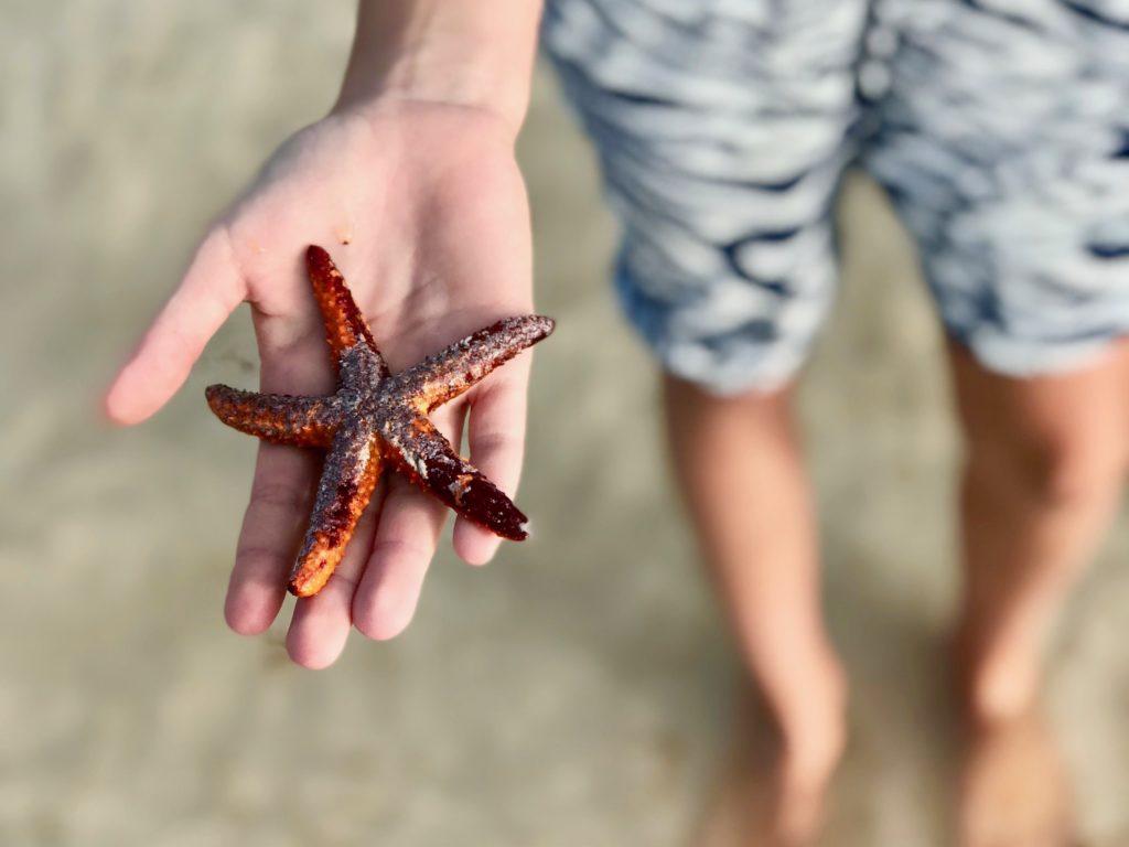 mehika morska zvezda holbox