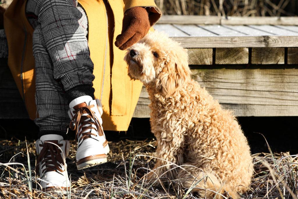 aprikot pudelj nika veger beautyfull blog pes koder