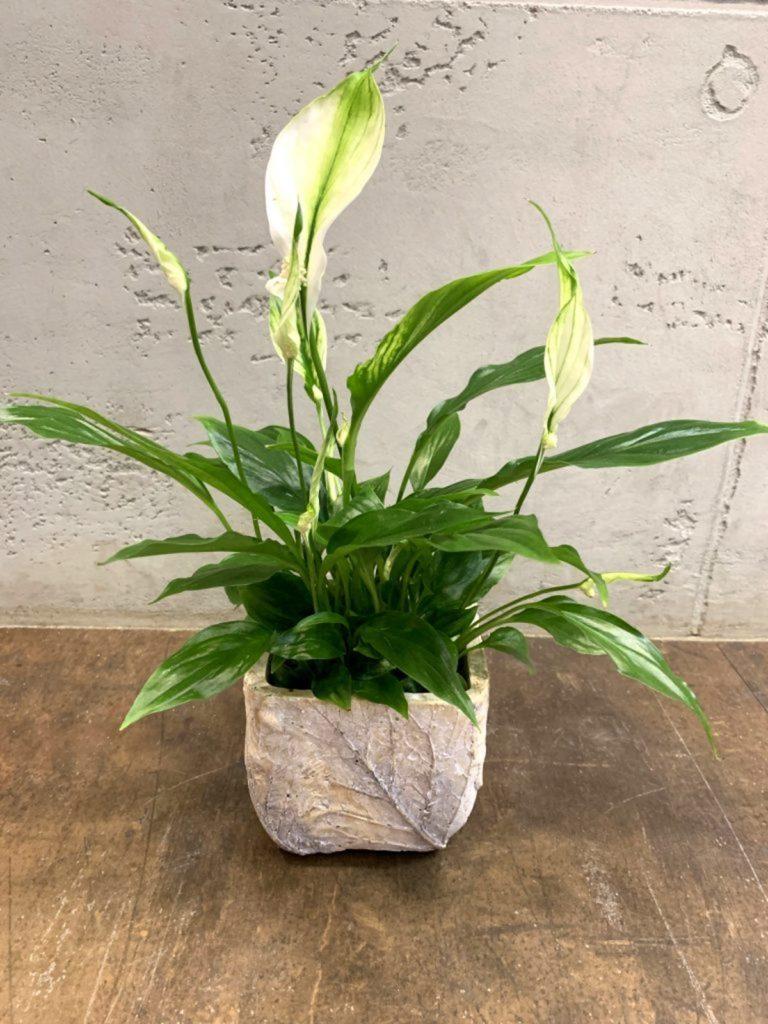 gardenia DIY moderni lonci za rože beautyfull blog 04