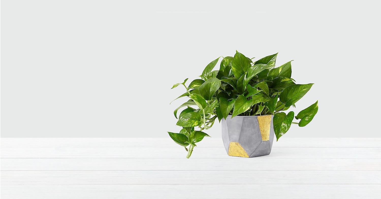 DIY moderni lonci za rože beautyfull blog